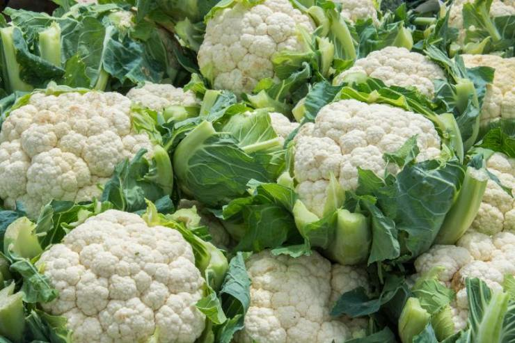 Group of cauliflowers with green leaves-seed starting