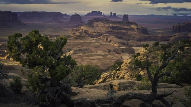 A scenery of rock formations and different kinds of plants at the canyon-terrain