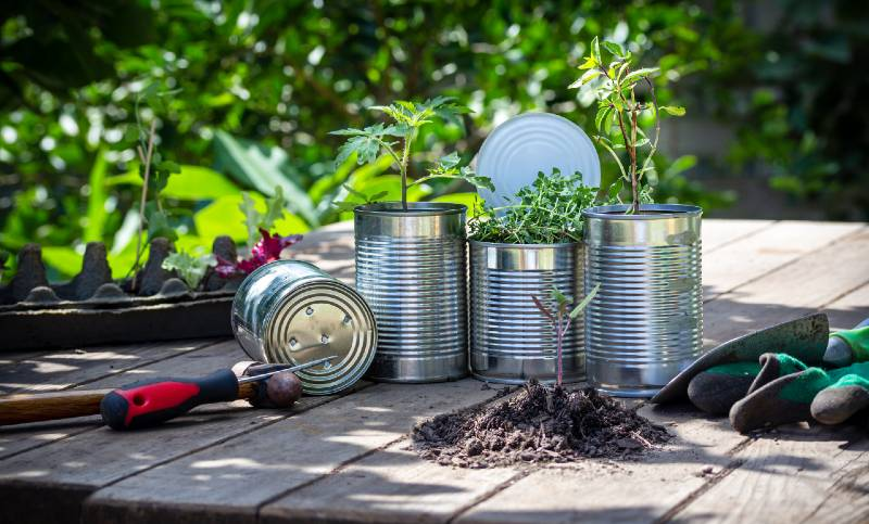 Close up of vegetable seedlings being potted in reuse tin cans outside on garden bench-Small Space Garden