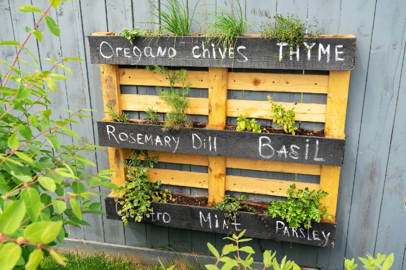 Creative wood herb planter made of wooden pallets pallet hanging on the grey fence in a backyard. Garden work-Small Space Garden