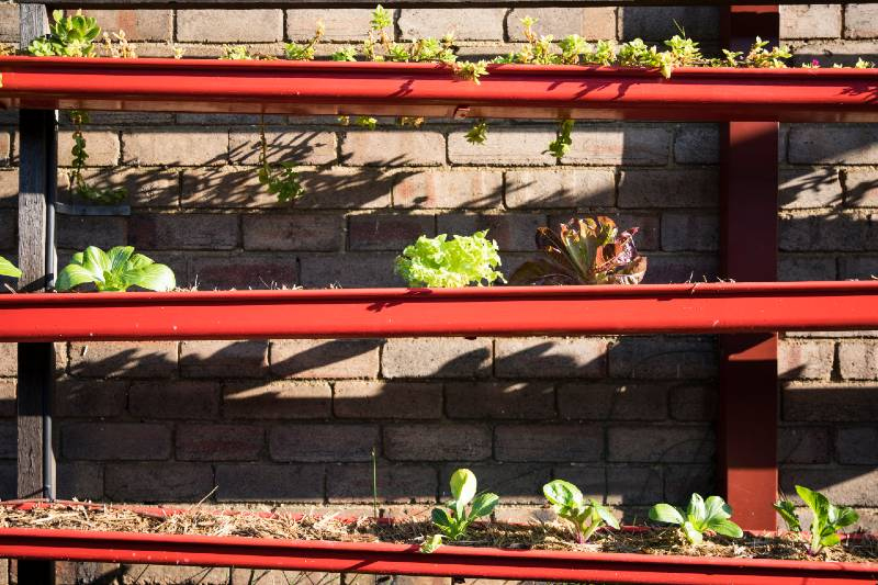 Household guttering reused to grow plants and create a vertical garden-Small Space Garden