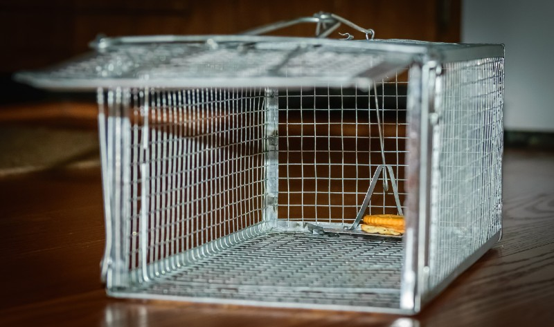 Looking inside of a humane mouse trap cage with cracker for bait-Humane catch-Survival Skills