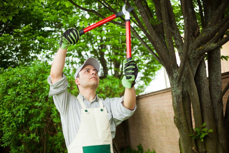Man trimming trees | Hurricane survival guide