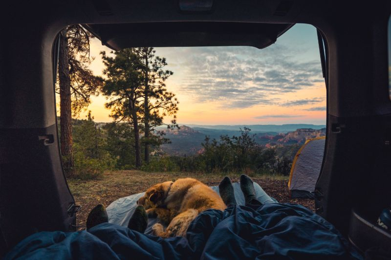 Camping dogs | Camping Cots