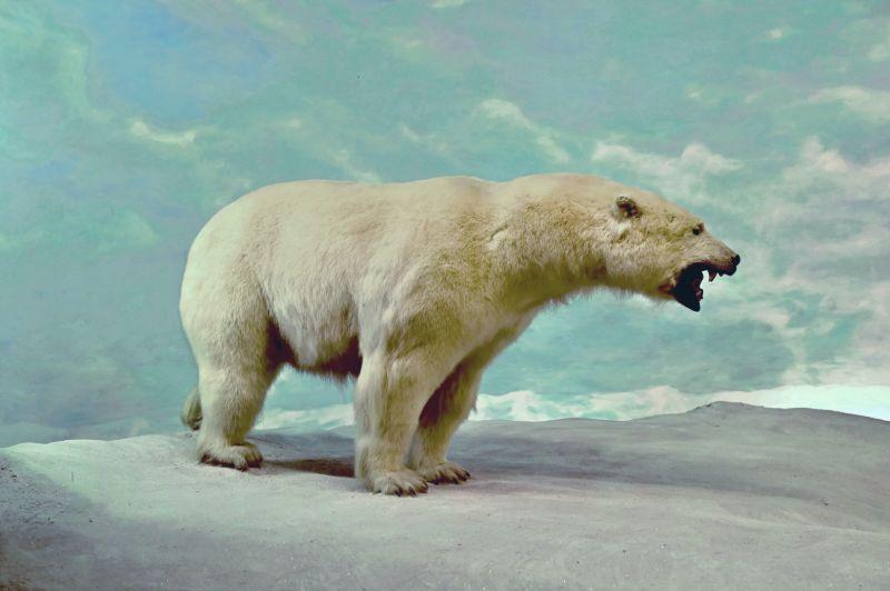 Growling polar bear   Best bear spray