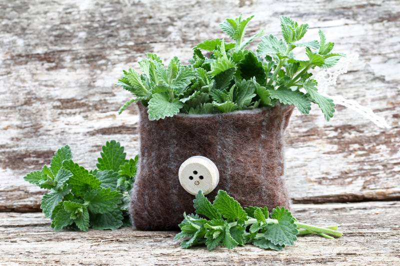 catnip-small-bag How to get rid of mosquitoes